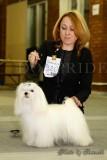 Франшиза Федеральная сеть кинологических центров DogPride: DogPride на выставках