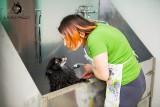 Федеральная сеть кинологических центров DogPride Груминг в одном из центров